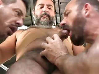 Three bears play with their nipples and sling slam