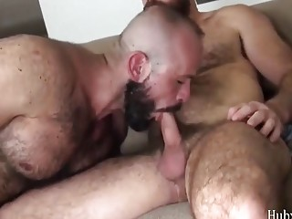 Hairy daddies are affectionate before hardcore gay sex