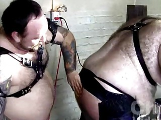 Big, furry bears in a BDSM scene