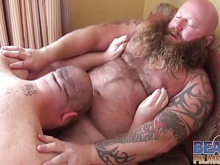 Bears with beards get busy sucking each other